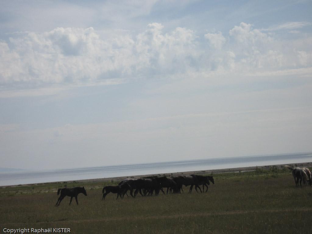 Chevaux autour d'un village Bouriate, en bordure du Lac Baïkal