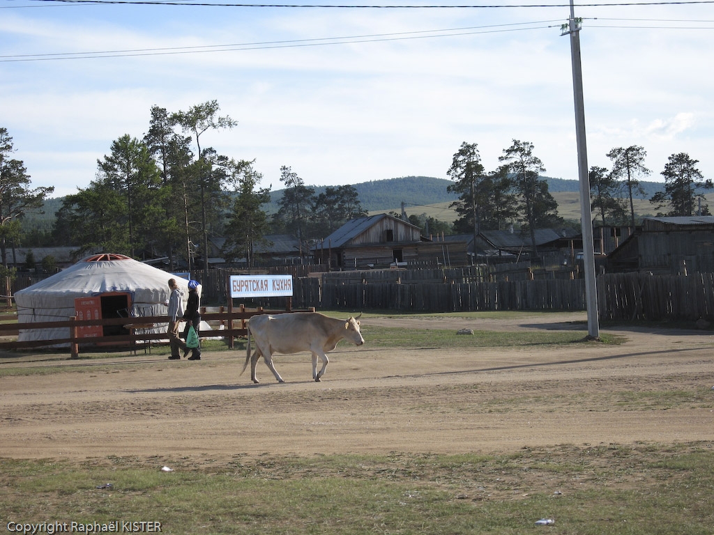 Aperçu du centre du village Khugir. Les vaches sont en liberté sur l'île