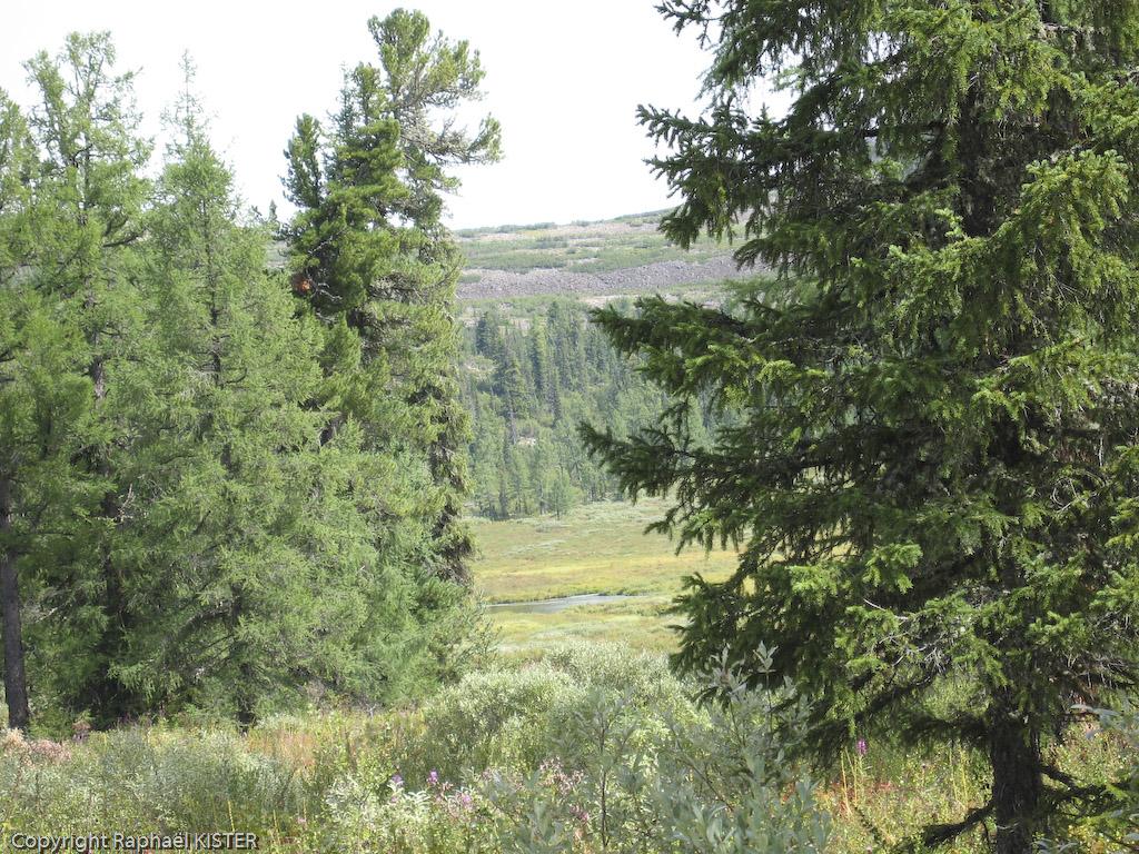 Aperçu de la taiga depuis la cabane des gardiens - Sources de la Léna - 3e jour