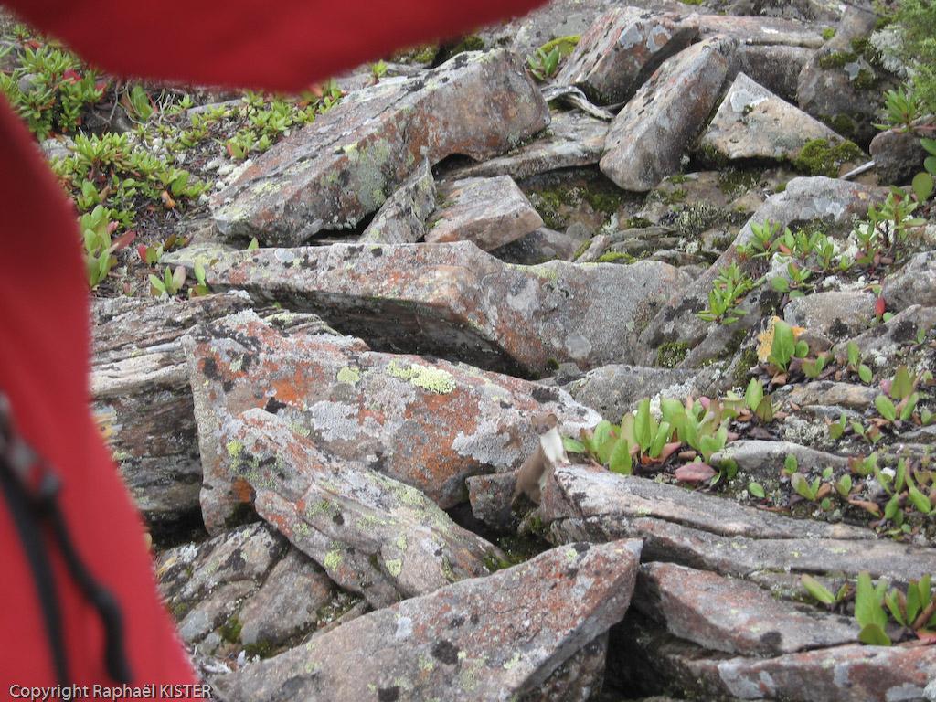 Une hermine à côté du lac - Sources de la Léna - 4e jour