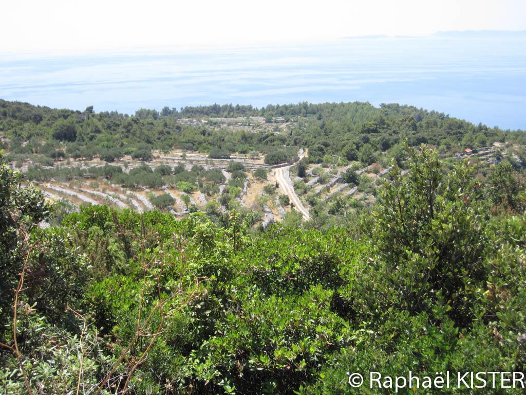 Aperçu des plantations d'oliviers
