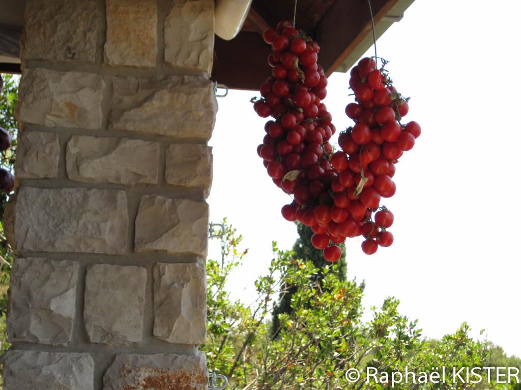 Une belle grappe de tomates, au restaurant