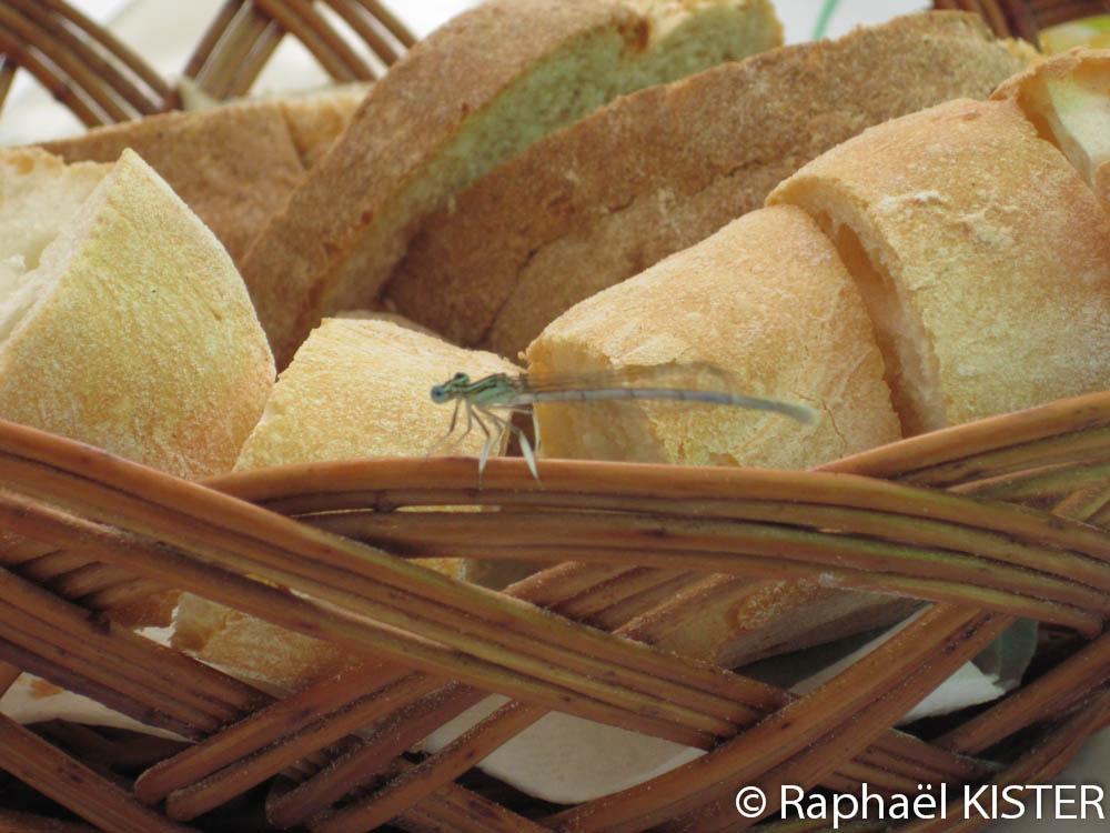 Libellule sur la corbeille de pain
