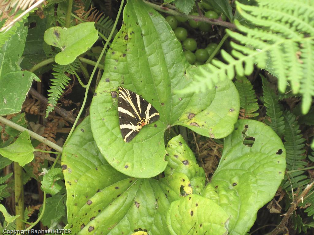 Un papillon caché sur une feuille le long du circuit de notre marche