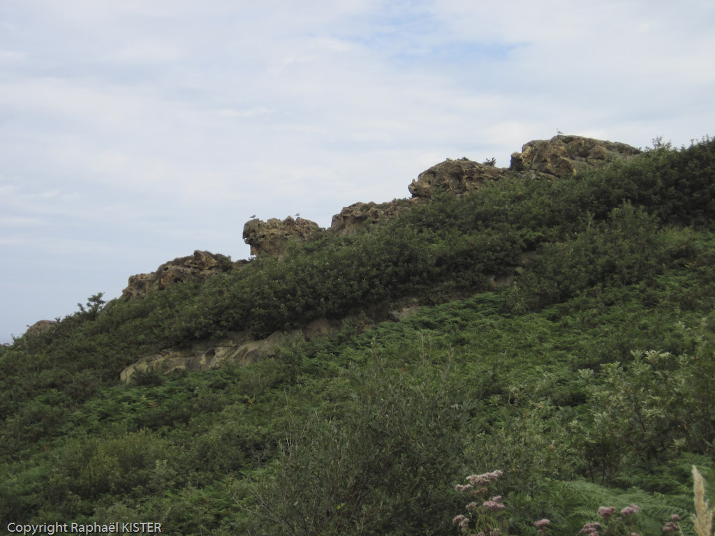 Mouettes alignées sur le littoral proche de San-Sébastien