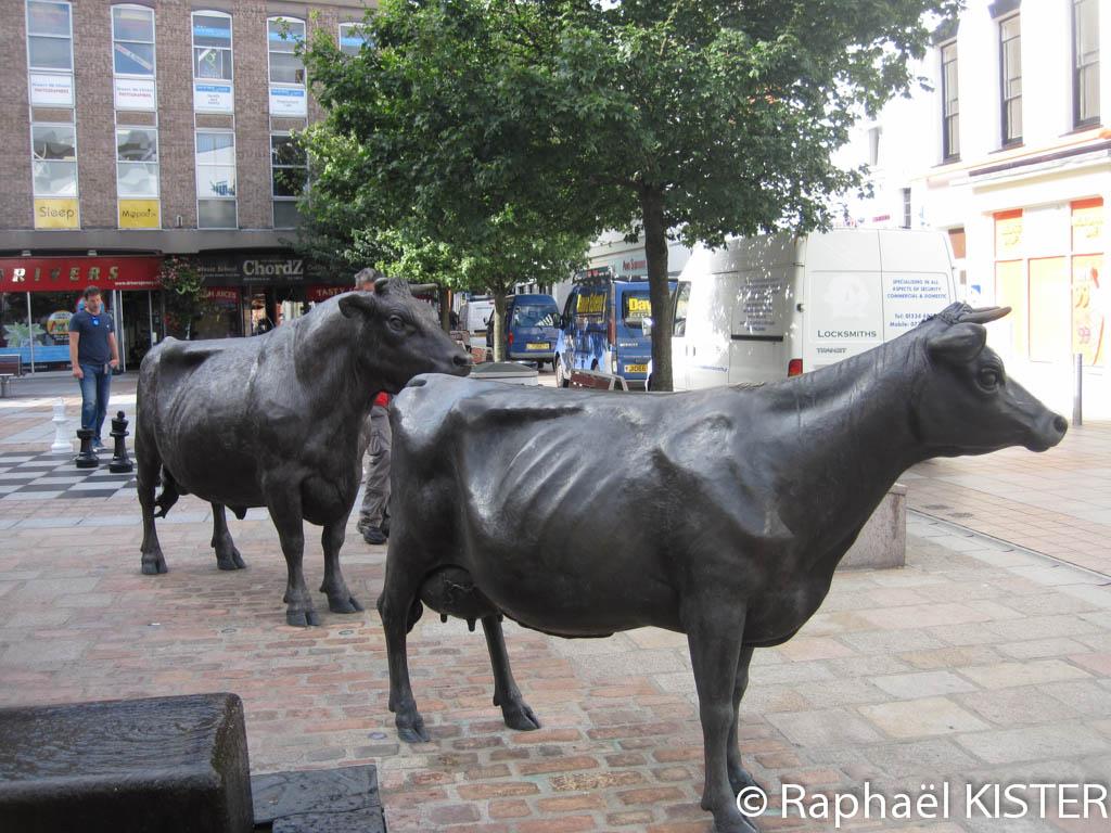 Statues de vaches à Saint Hélier